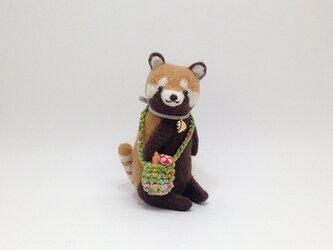 お出かけレッサーパンダさんの画像