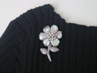 真珠の一番花の画像