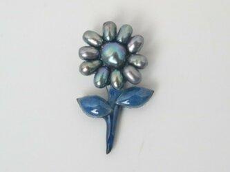 一番ちっちゃい青の花の画像