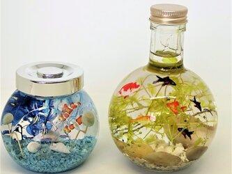 金魚鉢の中で泳ぐ金魚たちと水槽の中の熱帯魚の画像