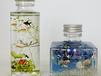 海中の中の熱帯魚と小さな世界の金魚の画像