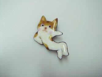 七宝 猫ちゃんシャッターチャンスの画像