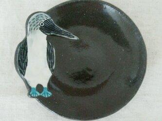 アオアシカツオドリ皿の画像