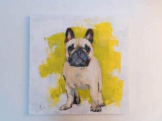 French bulldog / フレンチブルドックの画像