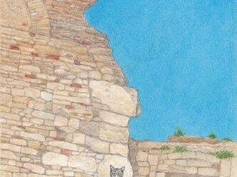 アルルの猫の画像