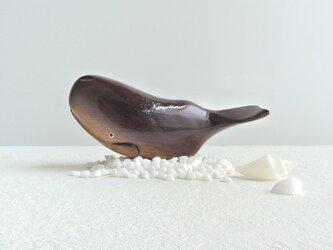 マッコウクジラの画像