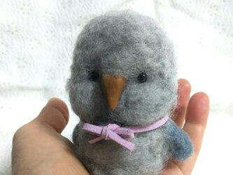 コロンとした小鳥さんの画像