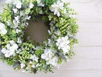 green wreath -qua-の画像