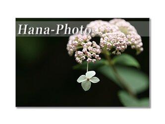 1360) 美しい紫陽花たち  ポストカード5枚組の画像