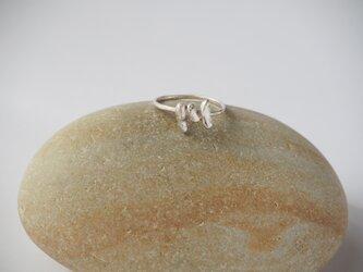 cocoon  7号 シルバーリング silver925 ◼pivo◼936の画像