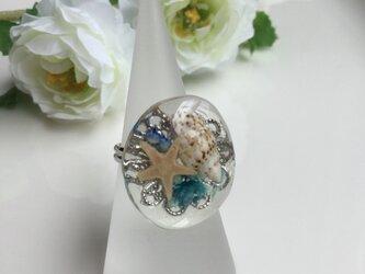 かわいい貝殻リングの画像