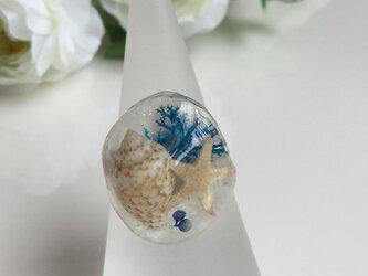 キュートな貝殻リングの画像