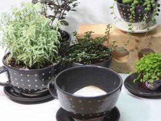 コーヒーカップ型植木鉢(大)(受け皿付き)   J623の画像