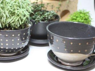 コーヒーカップ型植木鉢(小)(受け皿付き)   J625の画像