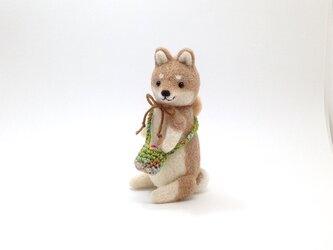 お出かけ柴犬さん(5)の画像