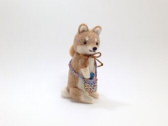 お出かけ柴犬さん(6)の画像