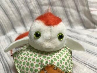 金魚ちゃん(さらさ)の画像