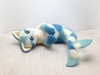 猫魚(3)の画像