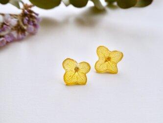 ひとひら紫陽花ピアス/イエローの画像