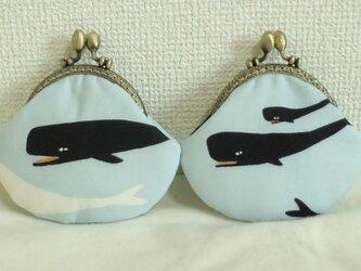ちいさながま口(マッコウクジラ)の画像