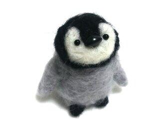 小さなペンギンさんの画像