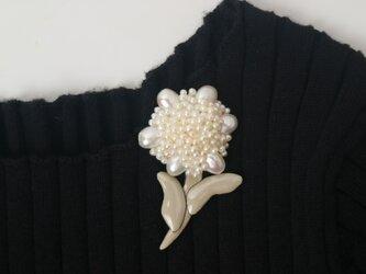 贅沢花の画像