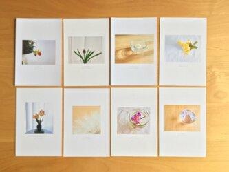 《送料無料》5枚選べる お花のポストカード Aの画像