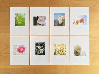 《送料無料》5枚 選べるお花のポストカード Bの画像