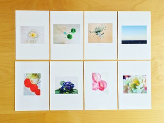 《送料無料》5枚 選べるお花のポストカード Cの画像