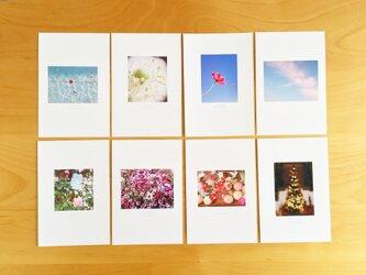 《送料無料》5枚 選べるお花のポストカード Dの画像