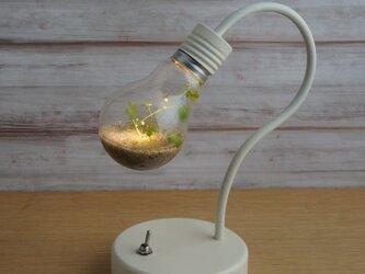 bulb terrarium mini [white]の画像