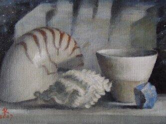 オウム貝と波形の貝殻の画像