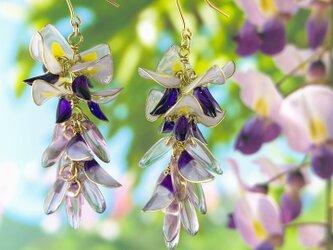 藤の花のピアス&イヤリングの画像
