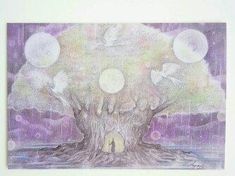 ポストカード2枚セット〖 星降る夜に 〗の画像