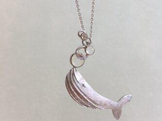 bubble whaleの画像
