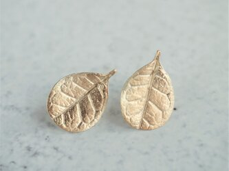 Feijoa leaf stud earrings (Small) {EP064K10}の画像