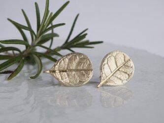 Feijoa leaf stud earrings (Small) [{EP064K10]の画像