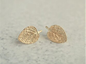 Marjoram stud earrings {EP062K10}の画像