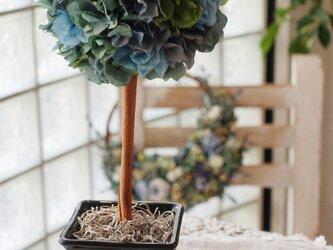 Blees♥プリザーブドフラワー紫陽花の 「SimpleトピアリーM」ブルーの画像