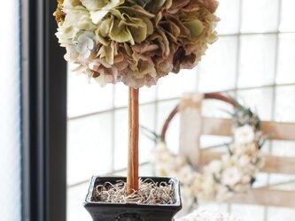 Blees♥プリザーブドフラワー紫陽花の 「SimpleトピアリーM」ブラウンの画像