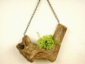 【温泉流木】L字V字の立派な流木の吊り式飾り台 流木インテリアの画像