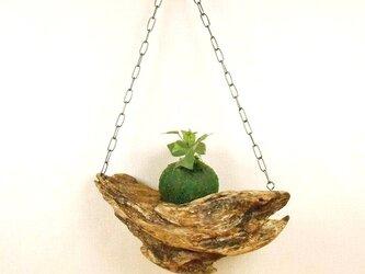 【温泉流木】どんぶらこ波の流木の吊り式飾り台 流木インテリアの画像
