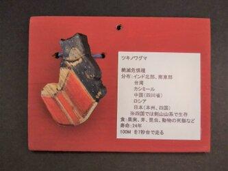 木彫り 『RED』ツキノワグマ ブローチ《本開きVer.1》の画像