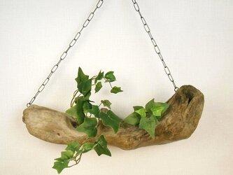 【温泉流木】ハンモックで安らいでいるような吊り式飾り台 流木インテリアの画像
