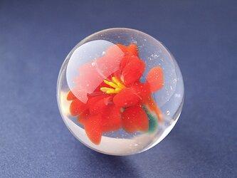 flower Marble(カンナ)の画像