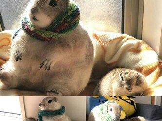 ☆受注制作 羊毛フェルトのリチャードソンジリス、ビッグサイズの画像