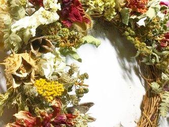 イガナスと洋種山牛蒡ナチュラルドライフラワーハーフリース!Atelier Kouanの画像