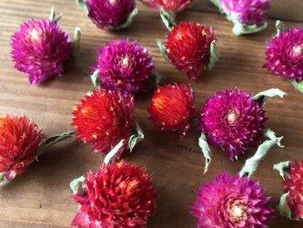 千日紅ヘッド14個 ピンク&レッド各7個づつ ストロベリーフィールド ラズベリーフィールド ドライフラワー花材  星月猫の画像