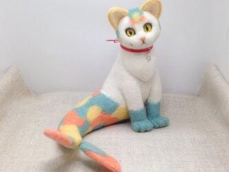 猫魚(5)の画像