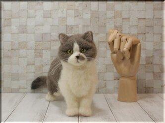 羊毛フェルト 猫 ブリティッシュ・ショートヘアさん ねこ ネコ 猫フィギュアの画像